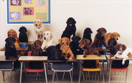 dogs_in_classroom